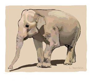 Elephant by Larry Hankin